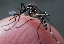 http://www.lacorameco.com.ar/imagenes/dengue_15ene.jpg
