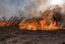 http://www.lacorameco.com.ar/imagenes/incendio_19ene.jpg
