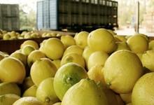 http://www.lacorameco.com.ar/imagenes/limones_16mar.jpg